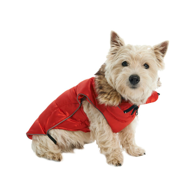 BUSTER Active Winter Dog Coat High Risk Red XX-Small 2